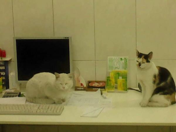 koty w provet