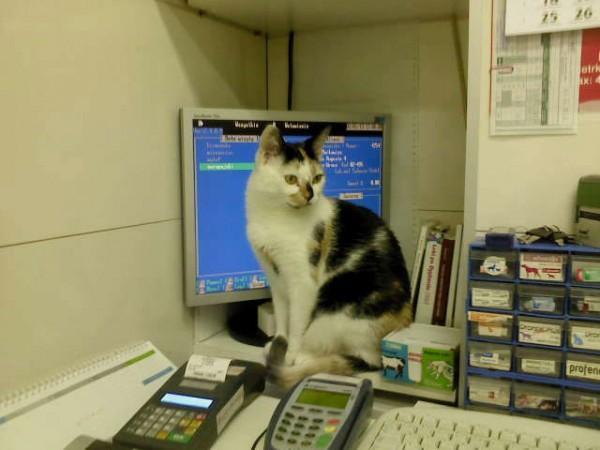 kot w provet 4