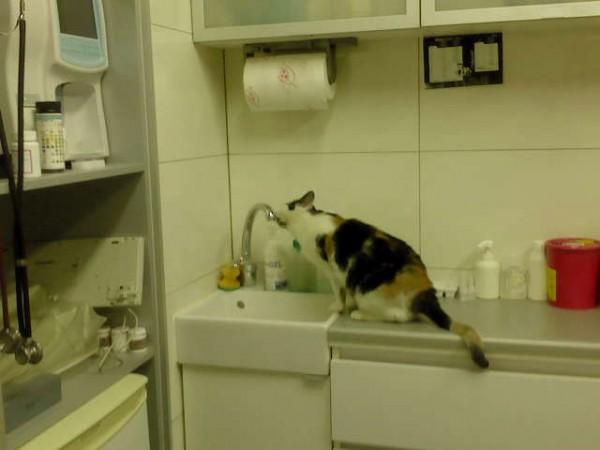 zrdowy kot w provet